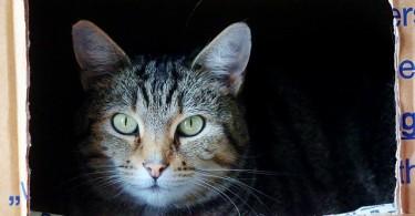 5.27.16.cat-in-the-box-5142x3390_101290